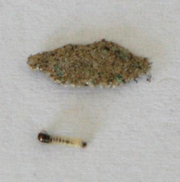 Case Bearing Moth Larva Found In Silverlake Los Angeles
