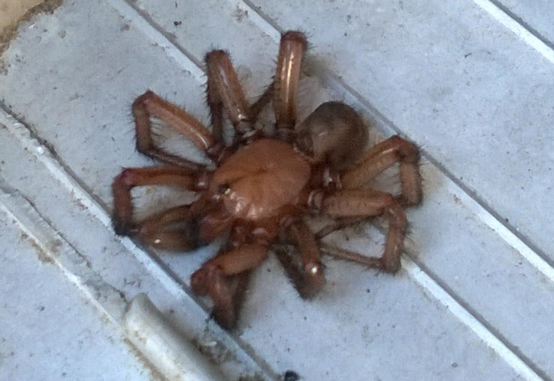 Tarantulas and Trapdoor Spiders Archives - Page 9 of 25 - What\'s ...