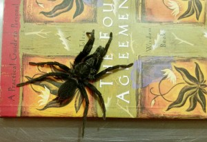 Probably Trapdoor Spider