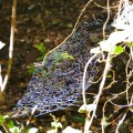 Unknown Spider Web