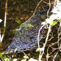 Unknown Spider Web