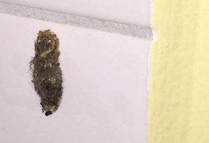 Case Bearing Moth Larva, we presume