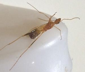 Unknown Hymenopteran