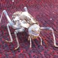 Armored Ground Cricket