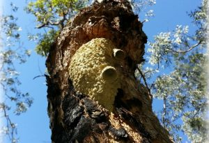 Termite Nest we believe
