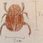 Dung Beetle Drawing, we believe