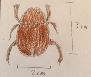 Dung Beetle Drawing, we believe