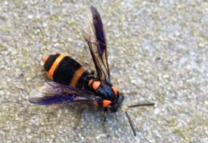 Probably Mason Wasp