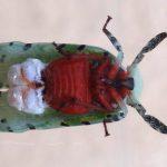 Moth Bug