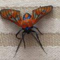 Wasp Moth:  Cosmosoma achemon
