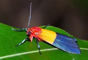 Moth: a Riot of Color