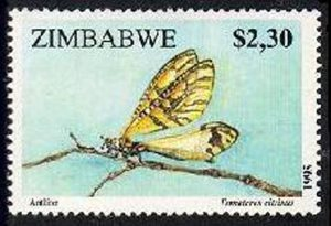 Painted Antlion on a stamp from Zimbabwe