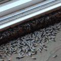 Swarming Termite Alates