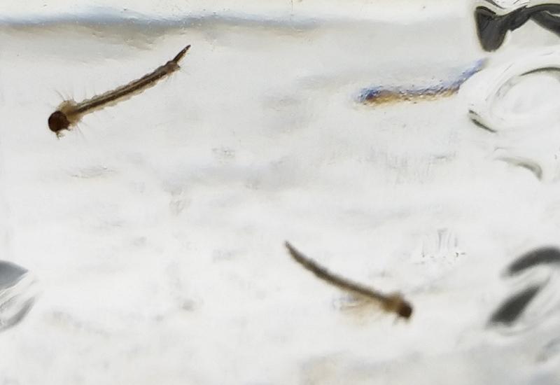 Amrita Bugs BeGone  amazoncom