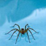 Grass Spider Walks on Water!!!