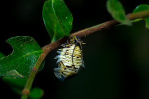 Unknown Horned Larva