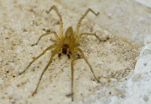 Possibly Lynx Spider