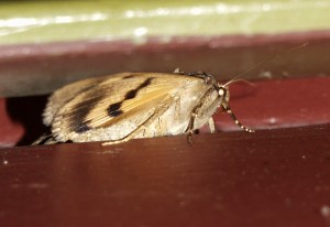 Under side of an Underwing