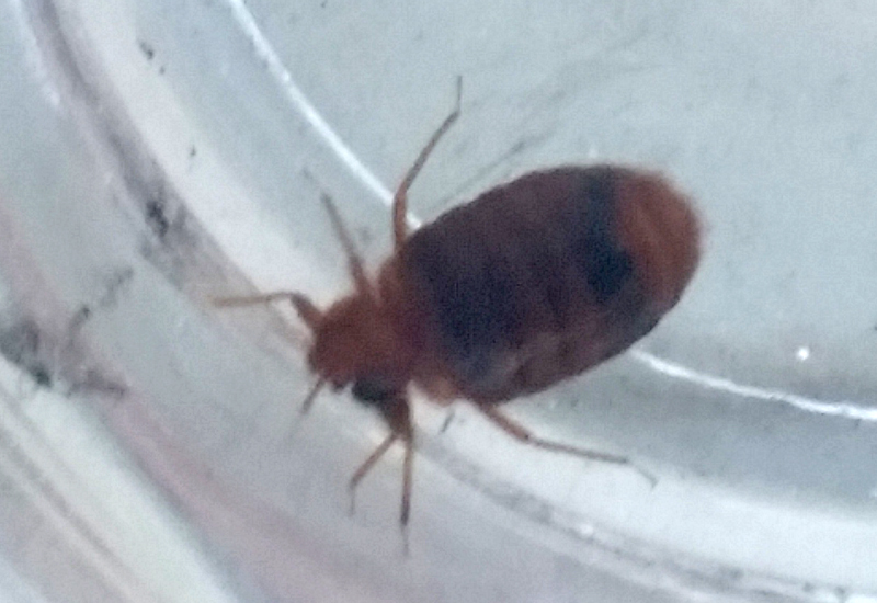 Bed Bug What 39 S That Bug