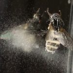 Fly Attacked by Fungus