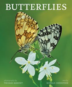 A nice gift idea for butterfly fans