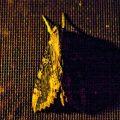 Ello Sphinx