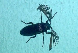 Click Beetle, we believe
