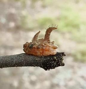 Monkey Slug