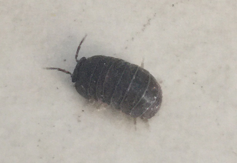 Small silver bugs in bathroom