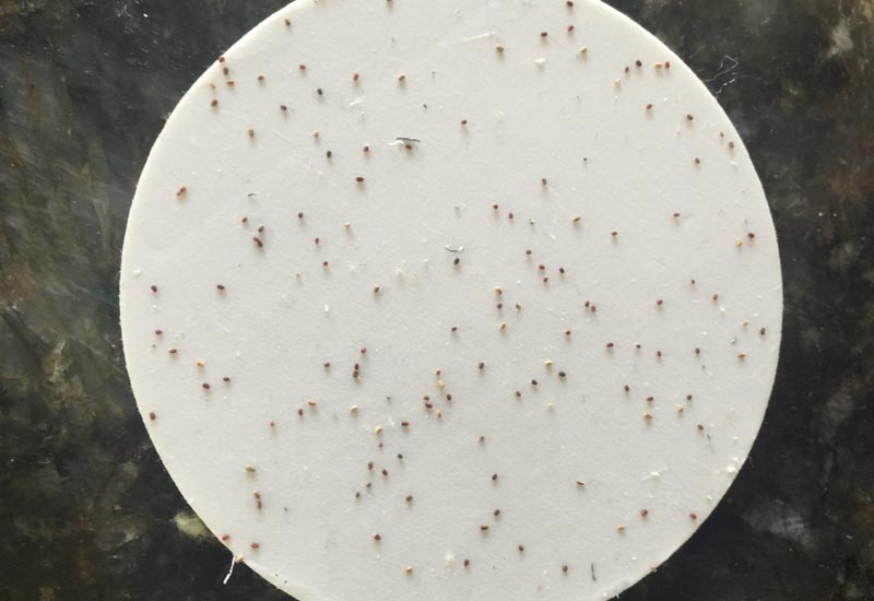 Termite Pellets What S That Bug