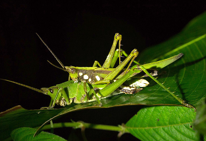 Grasshoppers Archives ...