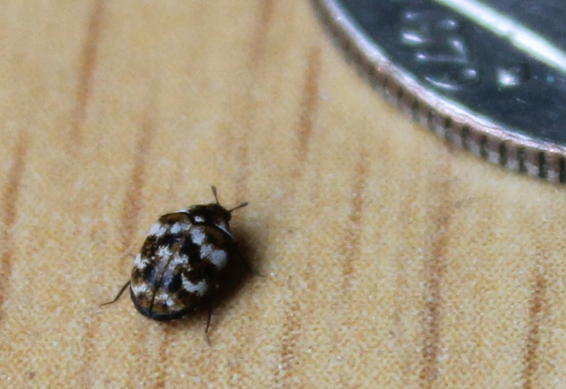 A Few Bed Bugs Spotted
