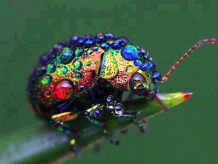Leaf Beetle Leaf Beetles Archives ...