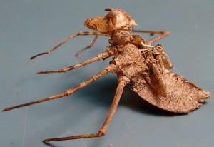 Dragonfly Exuvia