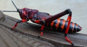 Koppie Foam Grasshoppers