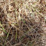 Find the Velvet Ant