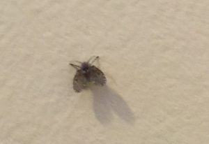 Bathroom Fly