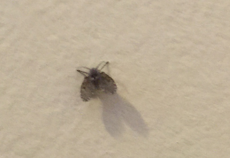 Small Black Flies In Bathroom Delonho. little black flies in bathroom   Bathroom Design Ideas