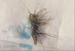 House Centipede Carnage