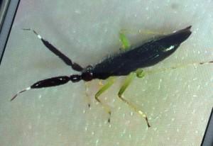 Possibly Unknown True Bug