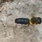Sculptured Resin Bee