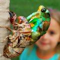 Annual Cicada Metamorphosis
