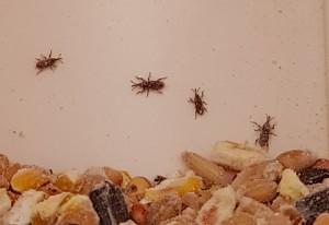 Weevils infest Bird Seed