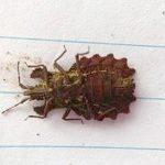 Unknown True Bug