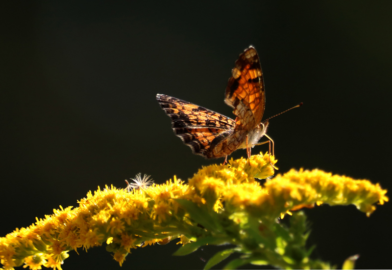 an exceptional butterfly in the meadow Wake audubon society has an adopt-a-park agreement with the city of raleigh for anderson point park in animals in this exceptional of the butterfly and.