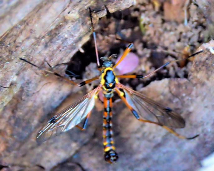 Cicada swarm flying
